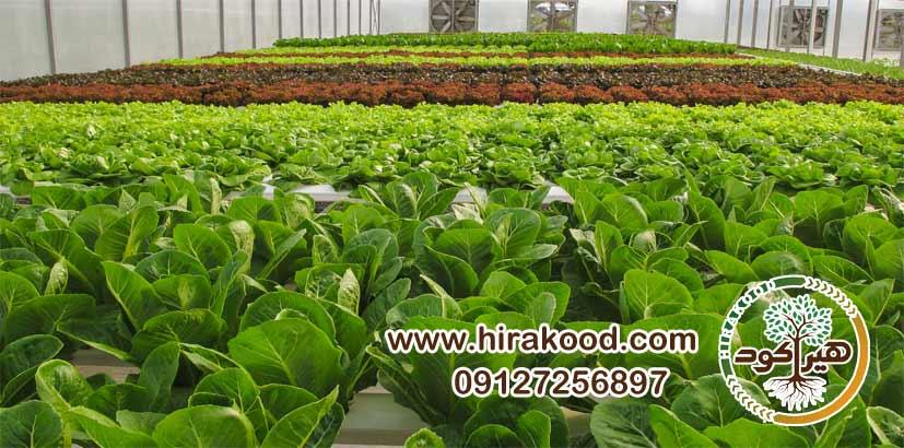 نحوه مصرف کود MOG برای سبزیجات